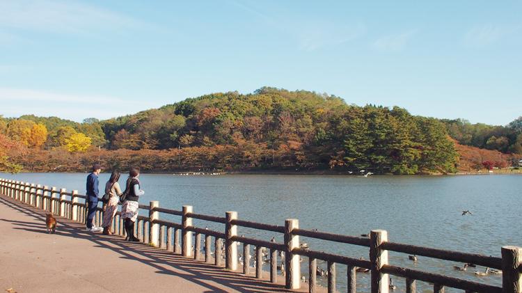 盛岡高松の池の様子