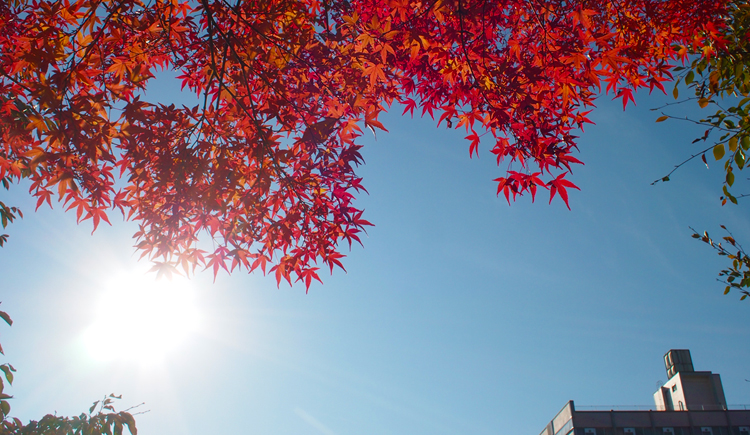 盛岡高松の池の紅葉