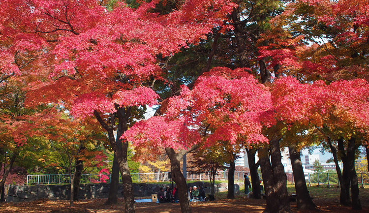 盛岡城跡公園の紅葉狩り